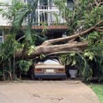 Tree Storm Damage Safety Tips